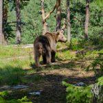 Uitstellen, beer op de weg, obstakels