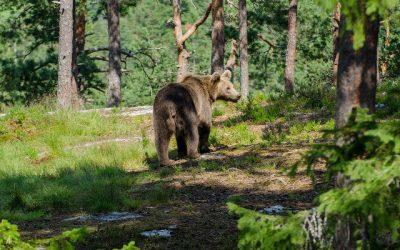 Ik zie veel beren op de weg (over uitstellen en obstakels)