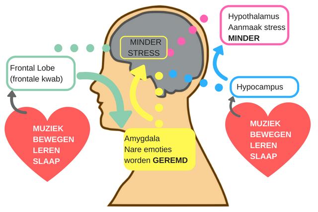 Wat heeft ons brein nodig voor minder stress en negatieve emoties?