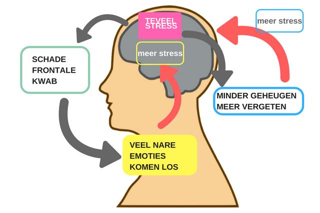 Wat gebeurt er in ons brein bij teveel stress?